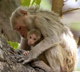 Wildlife at Bhimbandh Wildlife Sanctuary