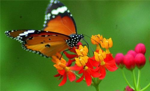 Butterfly Park in Karanji Lake