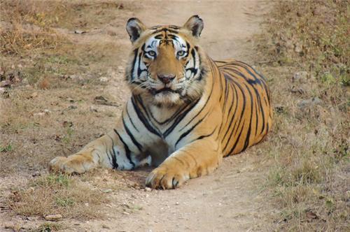Melghat Tiger Reserve Nagpur