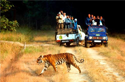 Jim Corbett National Park in Nainital
