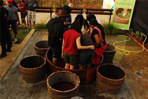 Winery Tours in Nashik