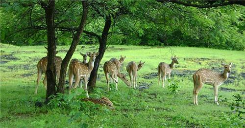 Gandhi Sagar Wildlife Sanctuary
