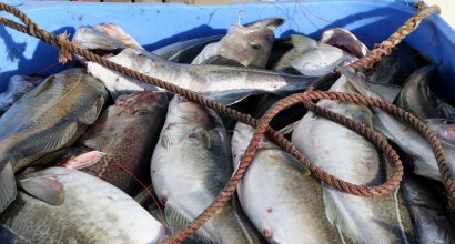 Sea Food Exporters in Nellore