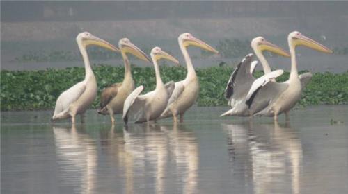 Wildlife in Noida