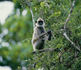 Yedshi Ramling Wildlife Sanctuary