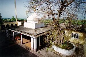The Bel Tree that Baba Chandji Planted