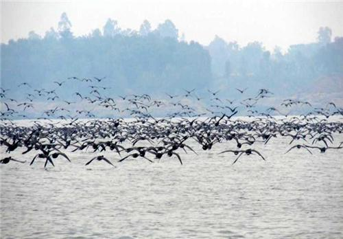 Birds at Maharana Pratap Sagar