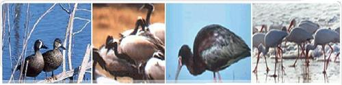 Flora and fauna of Porbandar Bird Sanctuary