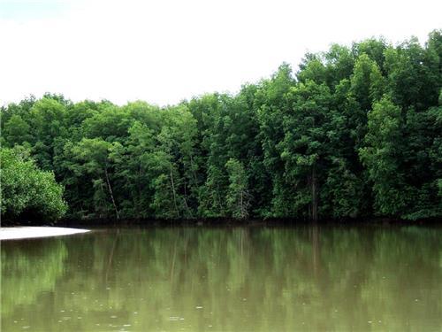 Mangorves Creeks of Mayabunder in Andaman