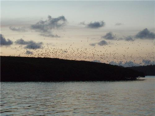 Parrots Flocking over the Parrot Island