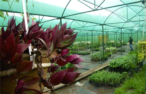 Horticultural Research at the Sippighat Agricultural Farm
