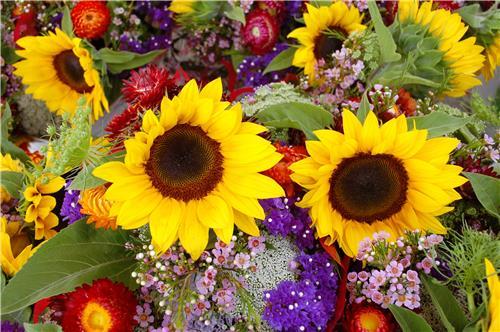 Florists in Purnia