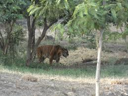 Attractions at Pradyuman Zoological Park in Rajkot