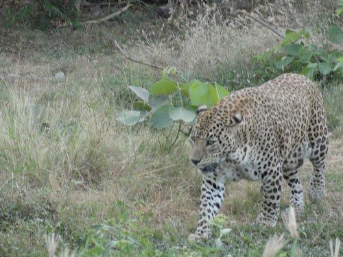 Animal to watch at Rajkot Prani Sangrahalay