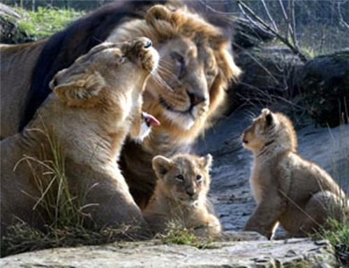 Attractions at Rampara Wildlife Sanctuary in Rajkot