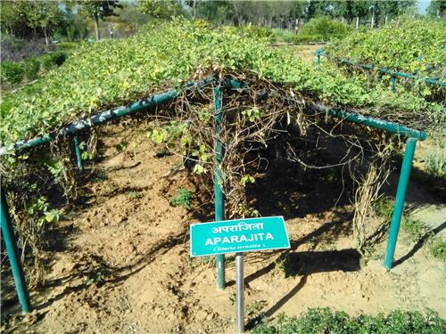 Rare Shrubs found at Biodiversity Park in Ranchi