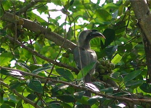 Natural abode of Birds at Biodiversity Park in Ranchi