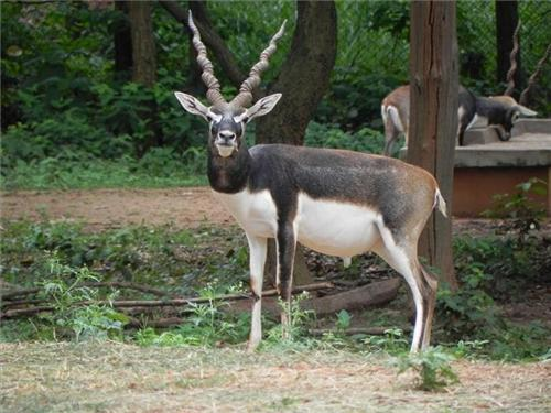 Animals discovered in the Natural habitat of Bhagwan Birsa Biological Park in Ranchi