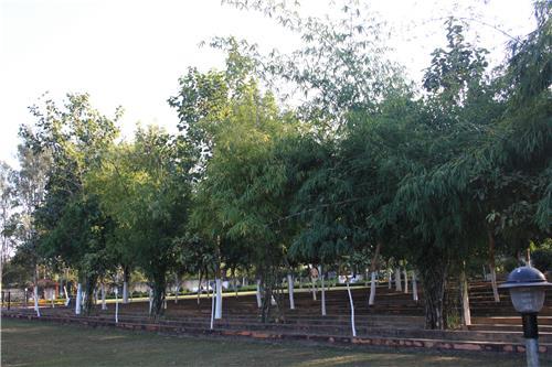 Green Environment of Nakshtra Van in Ranchi