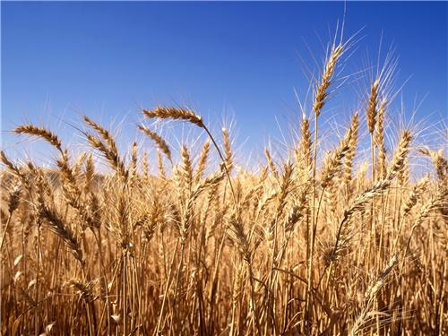Role of Agriculture in Rewari's Economic Growth