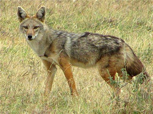 Fauna of Nahar Wildlife Sanctuary