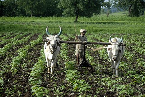 Agriculture in Sasaram