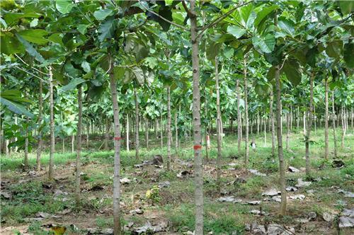 Vegetation in Sasaram
