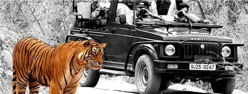 Travel agents in Sawaimadhopur