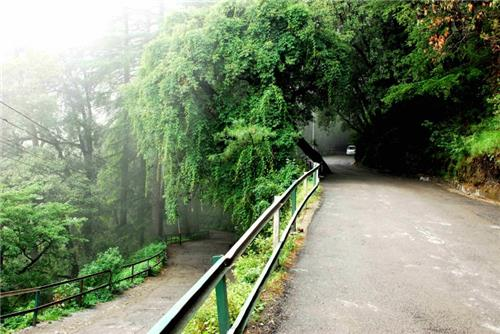 Tranquil Pathways of Summer Hill in Shimla