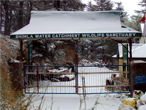 Visit Shimla Water Catchment Wildlife Sanctuary at Shimla