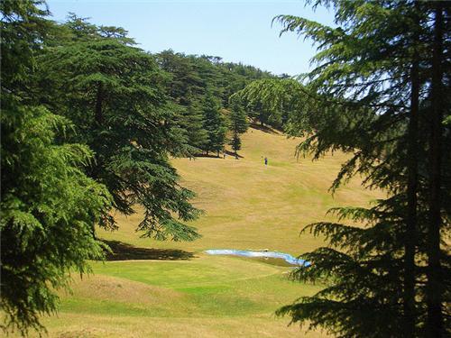 Naldehra Golf Course in Shimla