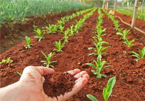 Soil Texture of Siwan