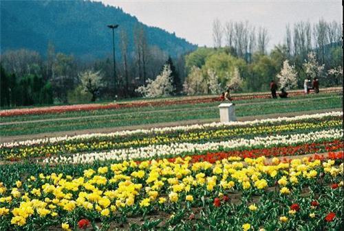 Location of Indira Gandhi Tulip Garden