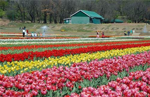 About Indira Gandhi Tulip Garden