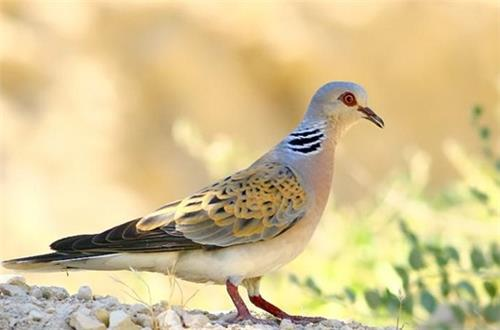 Birds inside the Dachigam Wildlife Sanctuary