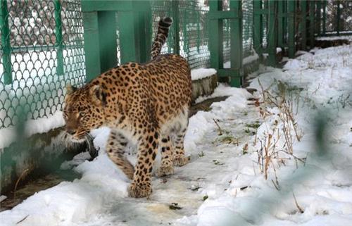 Inside the Dachigam Wildlife Sanctuary