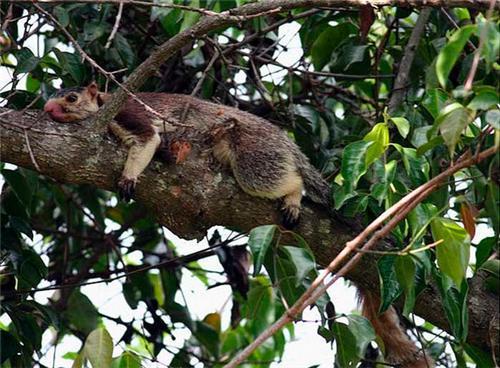 Idukki Wildlife Sanctuary Thiruvananthapuram