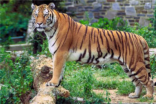 Faunal Population of Mundanthurai Wildlife Sanctuary