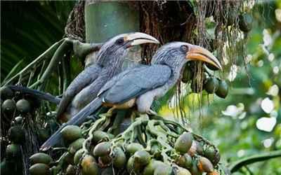 Avian Population of Mundanthurai Wildlife Sanctuary