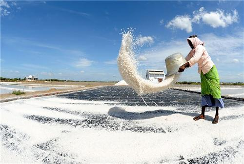 Salt Industry of Thoothukudi