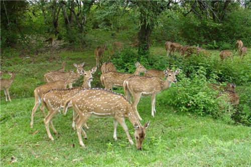 National Parks near Tirupati