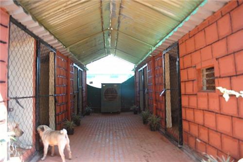 Pet Shops in Virar