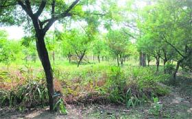 Activities at Chaudhary Devi Lal Herbal Nature Park in Yamunanagar