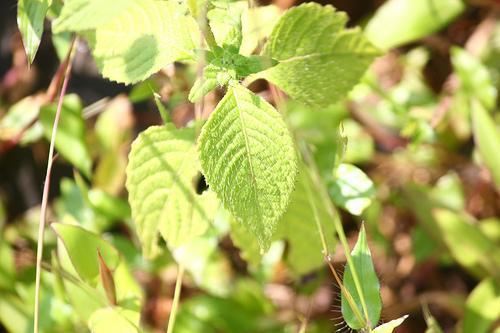 How to reach Chaudhary Devi Lal Herbal Nature Park in Yamunanagar