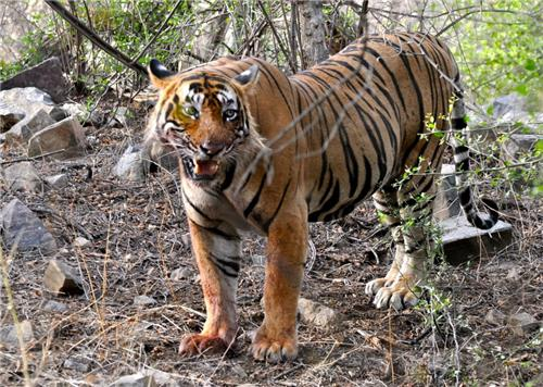 How to reach Attractions in Kalesar Wildlife Sanctuary