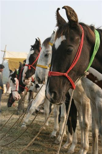 Agra Bateshwar Fair