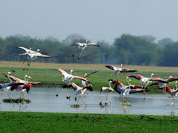 Thol Wildlife Sanctuary Ahmedabad