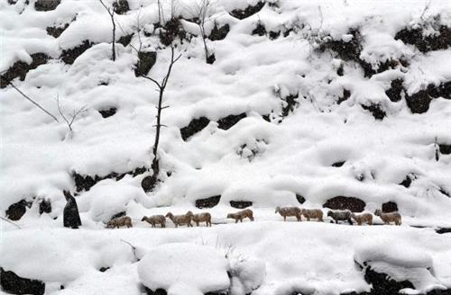 Daksum in winters