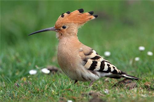 The birds at Tapan Dighi