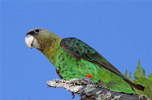 Kulik Bird Santuary, Malda